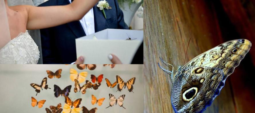 Un giorno speciale con la magia del volo delle farfalle