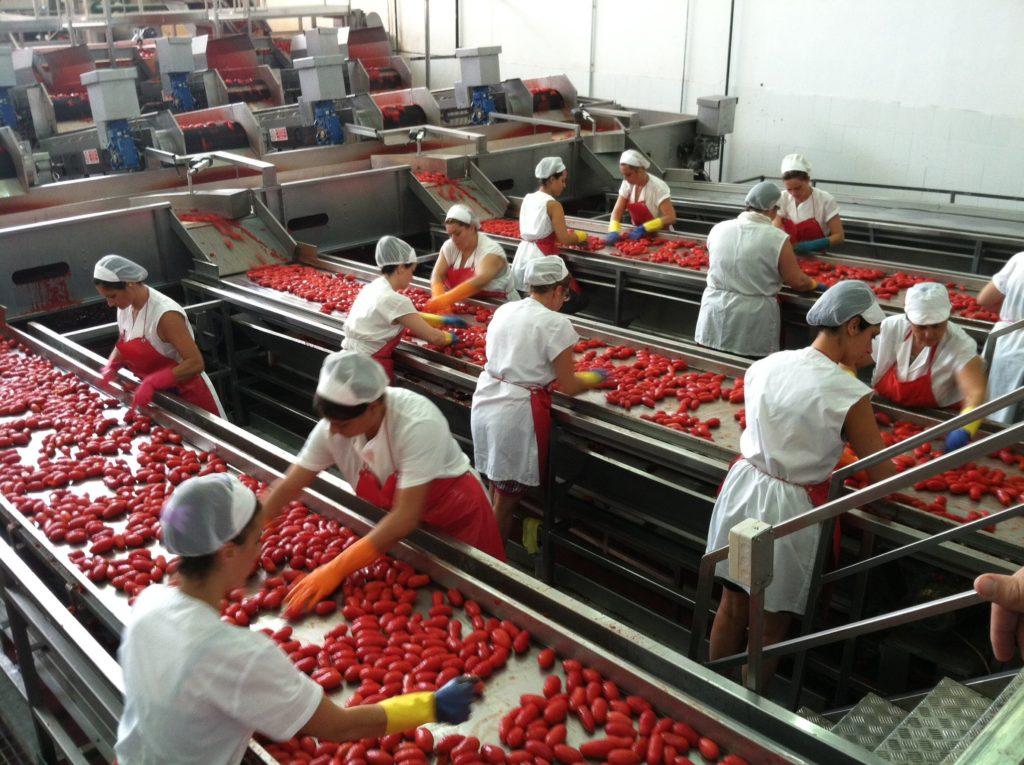 fabbrica-lavorazione-pomodori