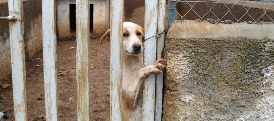 Chiuso l'inferno di Sarno: salvi gli ultimi cani prigionieri
