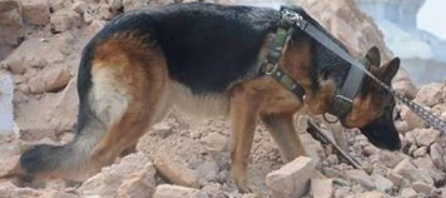 Terremoto – La Protezione Civile della Campania in aiuto con le unità  cinofile