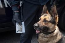 Droga in casa scoperta dai cani. Arrestato 46enne