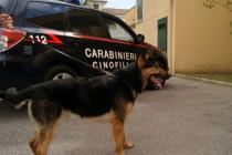 Cani antidroga di Sarno trovano cocaina interrata