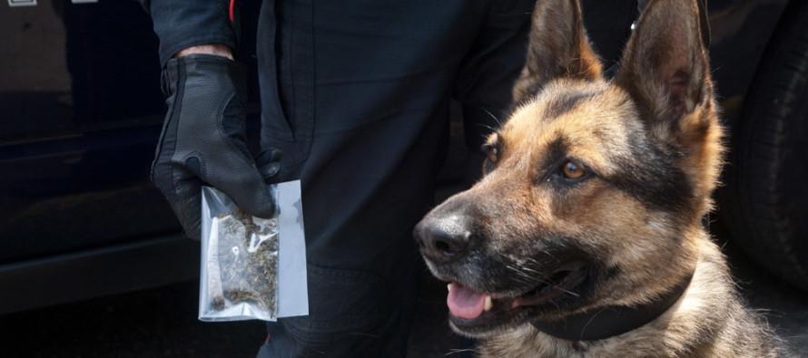 Droga nell'autolavaggio trovata dal cane Zidane. Arrestati padre e figlio