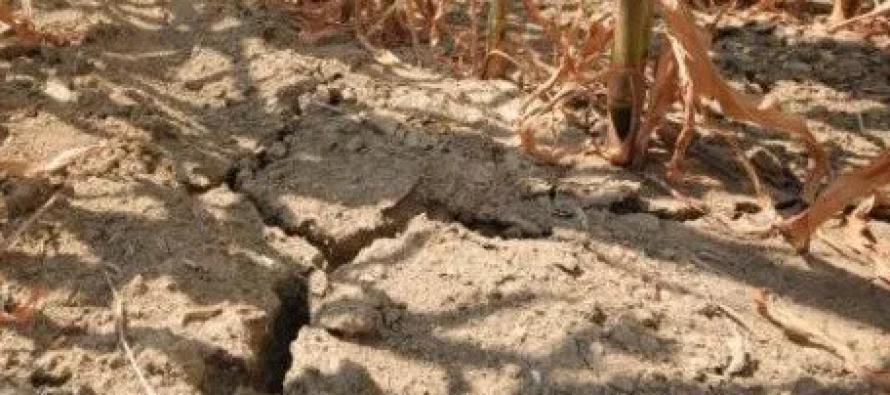 Siccità in Campania: chiesto lo stato di calamità