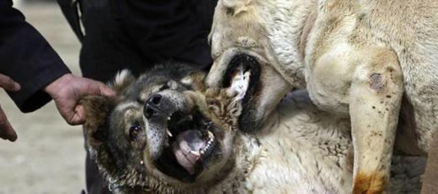 Cani si azzuffano ed i padroni si picchiano