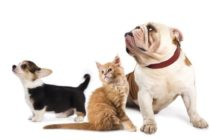 Igiene orale di cani e gatti: indispensabile!