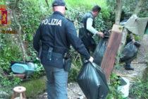 Coltivava marijuana nell'orto: sequestro e denuncia