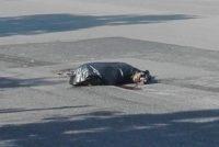 Cane rinchiuso in sacco nero e scaricato in strada