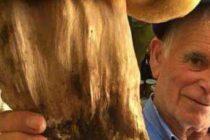 Ecco il super fungo porcino da 3 kg:  il record di Antonio sugli Alburni