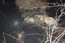 Carcasse di animali e rifiuti pericolosi nei canali. L'allarme