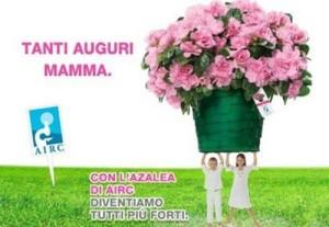 azalee-airc-festa-della-mamma