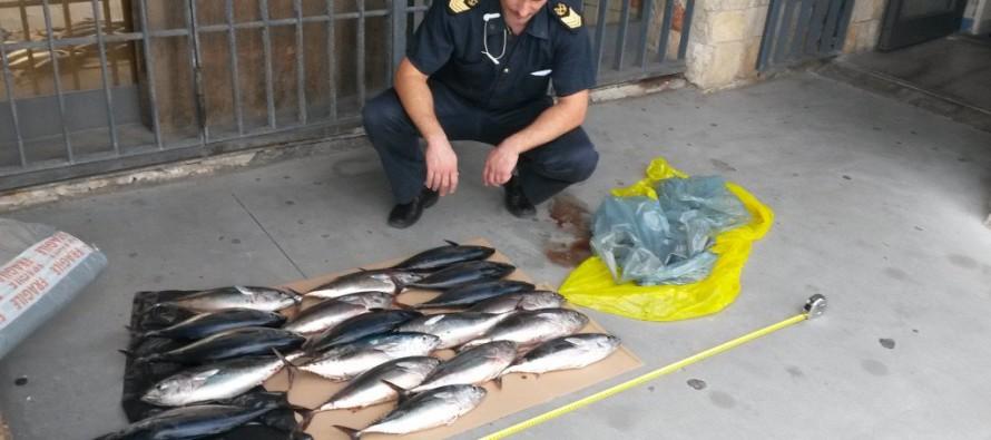 Pesca 22 esemplari di tonno rosso: denunciato un pescatore non professionista