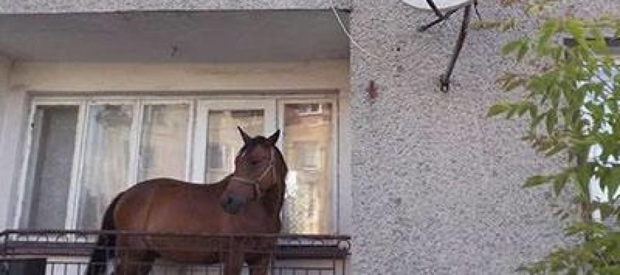 Cavallo sul balcone di casa, denunciato un uomo di 41 anni