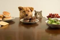 Dieta estiva per cani e gatti: ecco i consigli utili!