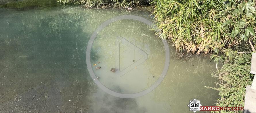 Video denuncia – Rio Palazzo ancora scarichi di materiale fecale