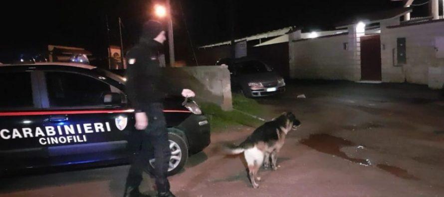 Droga: arresti a Sarno. Carabinieri ed unità cinofile in azione