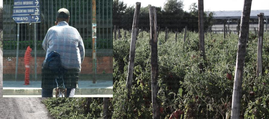 Coldiretti: mai così tanti immigrati nei campi. In Campania…