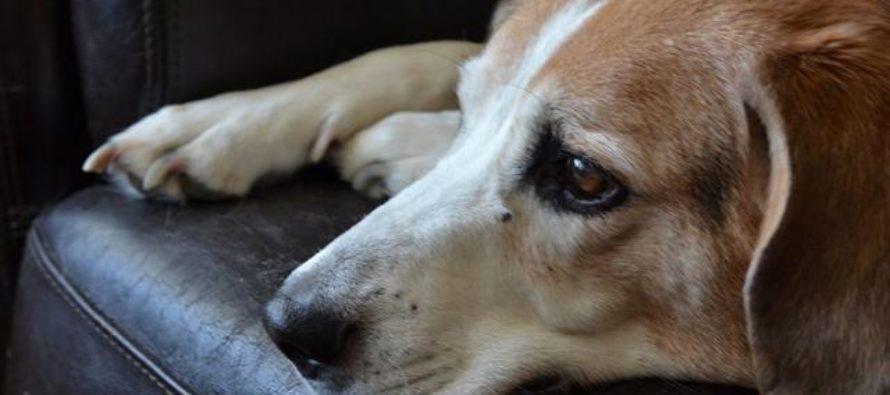 Muore in casa, il cagnolino lo veglia ed abbaia per ore