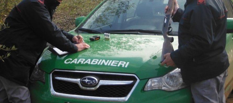 Campania, bilancio attività 2018 carabinieri forestali: denunce e sequestri in aumento