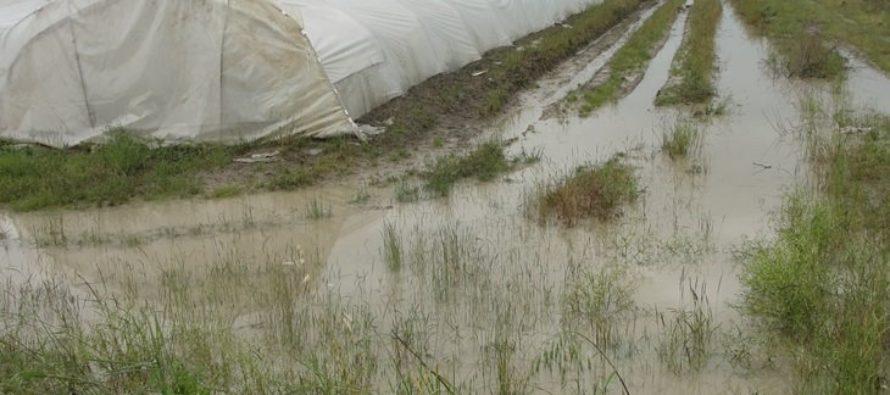 Maltempo: Coldiretti, in campagne danni per milioni